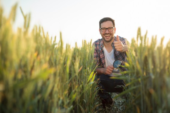 Fazendeiro novo feliz que agacha-se em um campo de trigo, inspecionando o desenvolvimento de planta.  Olhando diretamente para a câmera e mostrando o polegar para cima.  Agricultura biológica e produção de alimentos saudáveis - Imagem (Gligatron) s