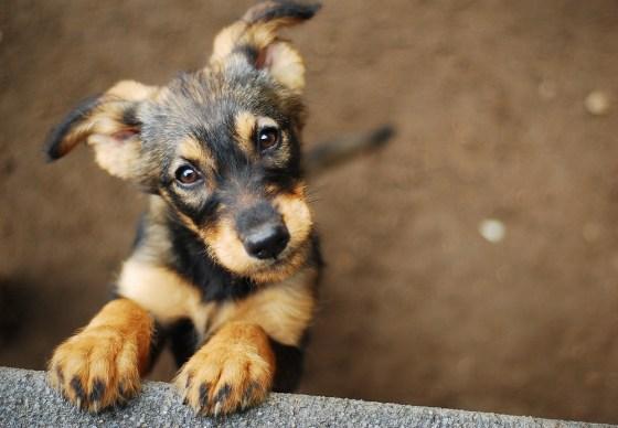 cachorro - imagem (Monika Chodak) s