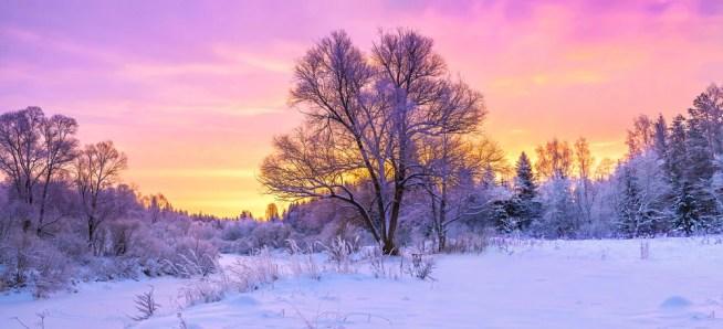paisagem de inverno panorama com floresta, árvores cobertas de neve e nascer do sol.  manhã de inverno de um novo dia (yanikap) s