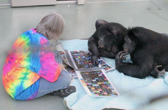 Bonobos Panbanisha & Kanzi com Sue Savage-Rumbaugh