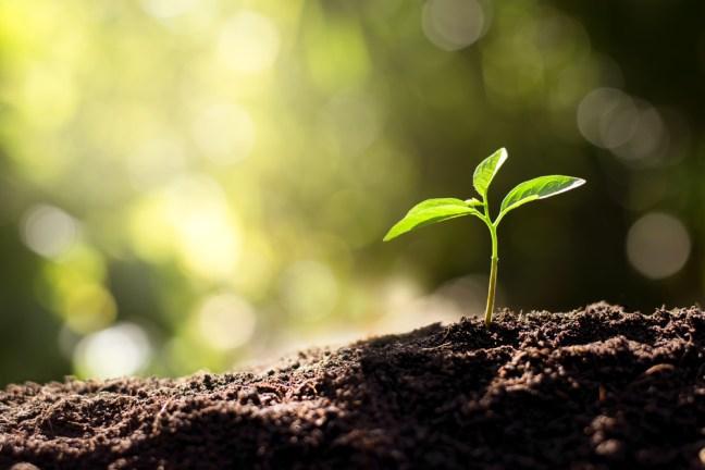As mudas estão crescendo a partir do solo rico (kram9) s
