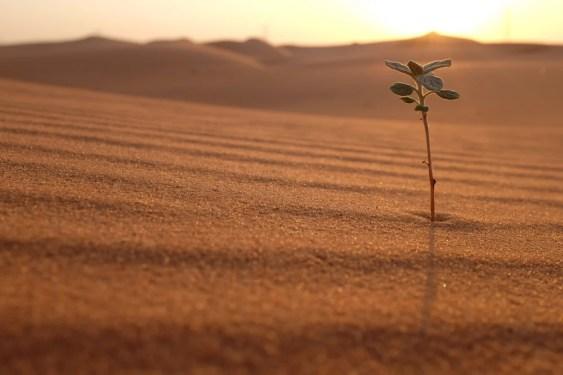 Uma planta em uma paisagem desértica ao nascer do sol (John Kevin) s
