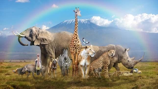 Grande grupo de animais selvagens africanos em uma cena mágica de bremas (Susan Schmitz) S