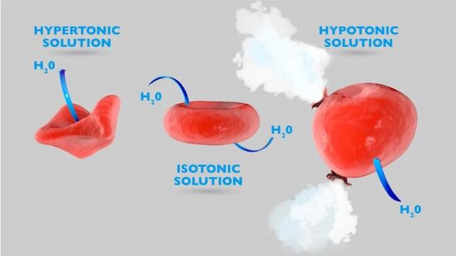 Osmose celular, célula em solução isotônica, célula em solução hipertônica (Naeblys) s