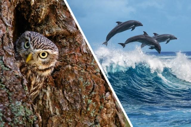 As árvores fornecem lares para pássaros e o grande oceano azul para incontáveis espécies marinhas, como golfinhos e baleias.