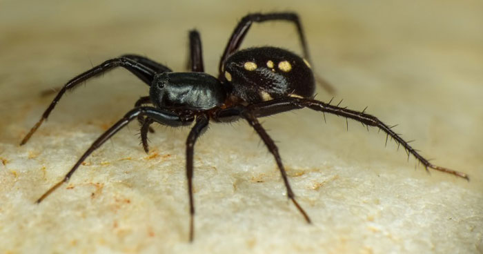 3429487801-spiders-3