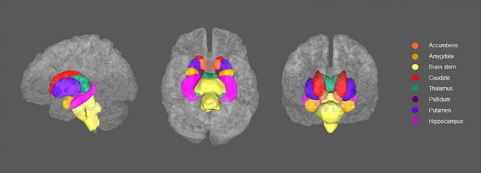brain dep 2