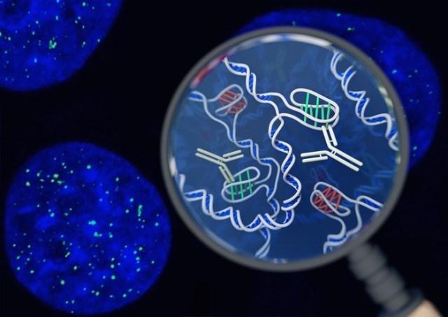 019 DNA le cellule viventi della struttura del motivo 2