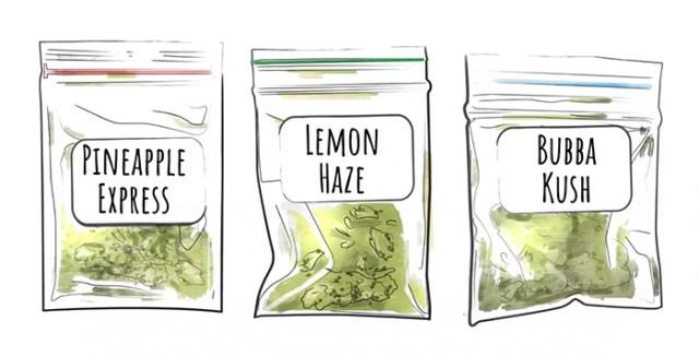 cannabis quiz pineapple express