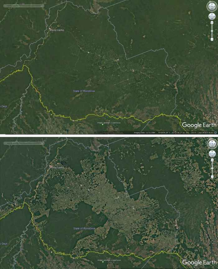 Deforestation around roads in Rondonia, Brazil, 1984-2016. (Google Earth)