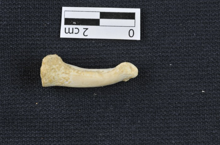 Homo luzonensis toe bone (Callao Cave Archaeology Project)