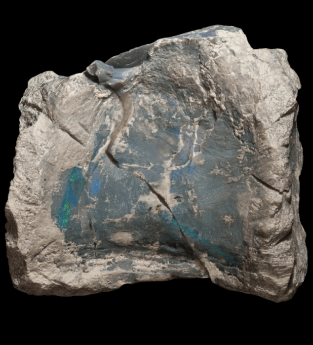 spectacular opal laced fossils reveal previously unknown australian dinosaur 587540