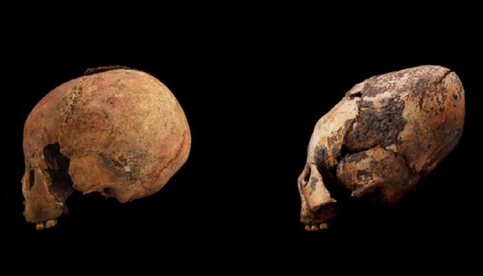 skull comparison sm