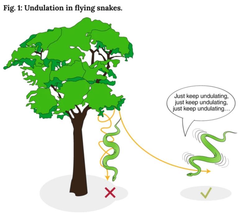 diagramofundulation