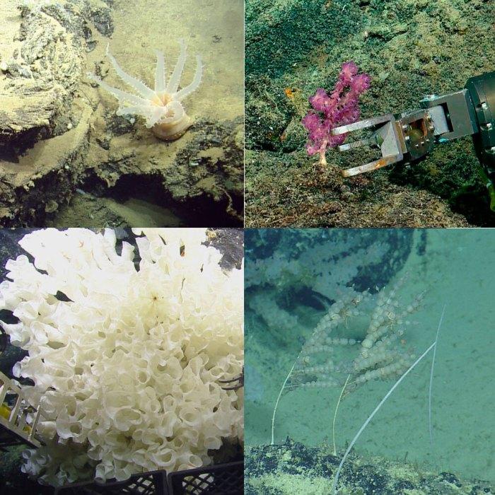 Examples of organisms collected. (Ocean Exploration Trust/Nautilus Live)