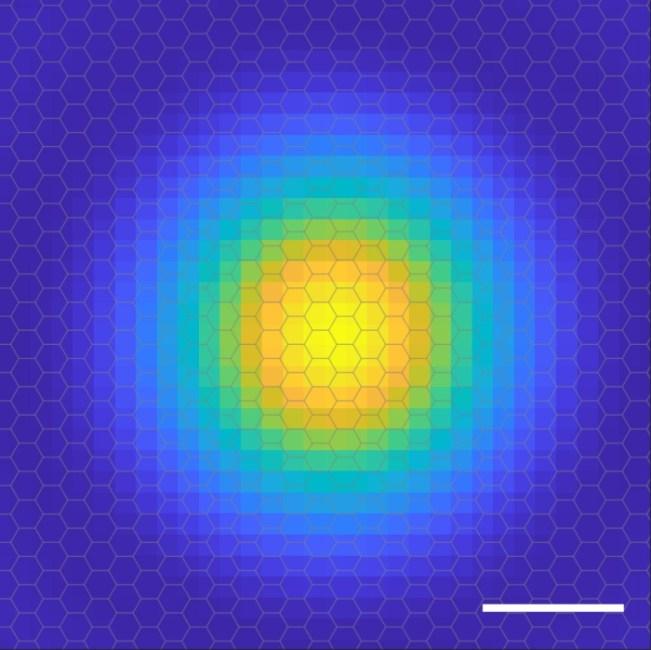 exciton probability