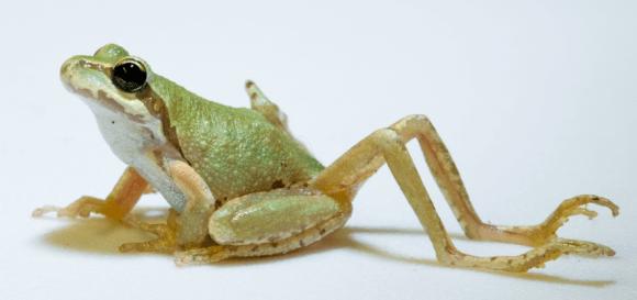 frog-mutation