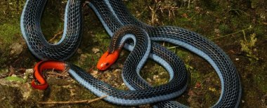 The venom from this beautiful snake will murder you horribly