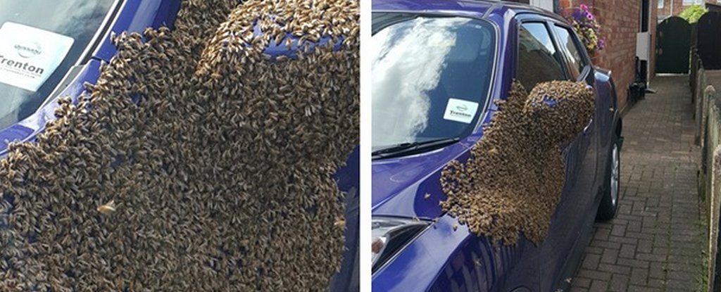 Thousands of bees took over a car in the UK and beekeepers