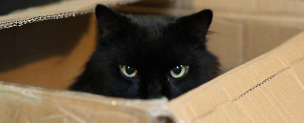 schrodinger s cat is