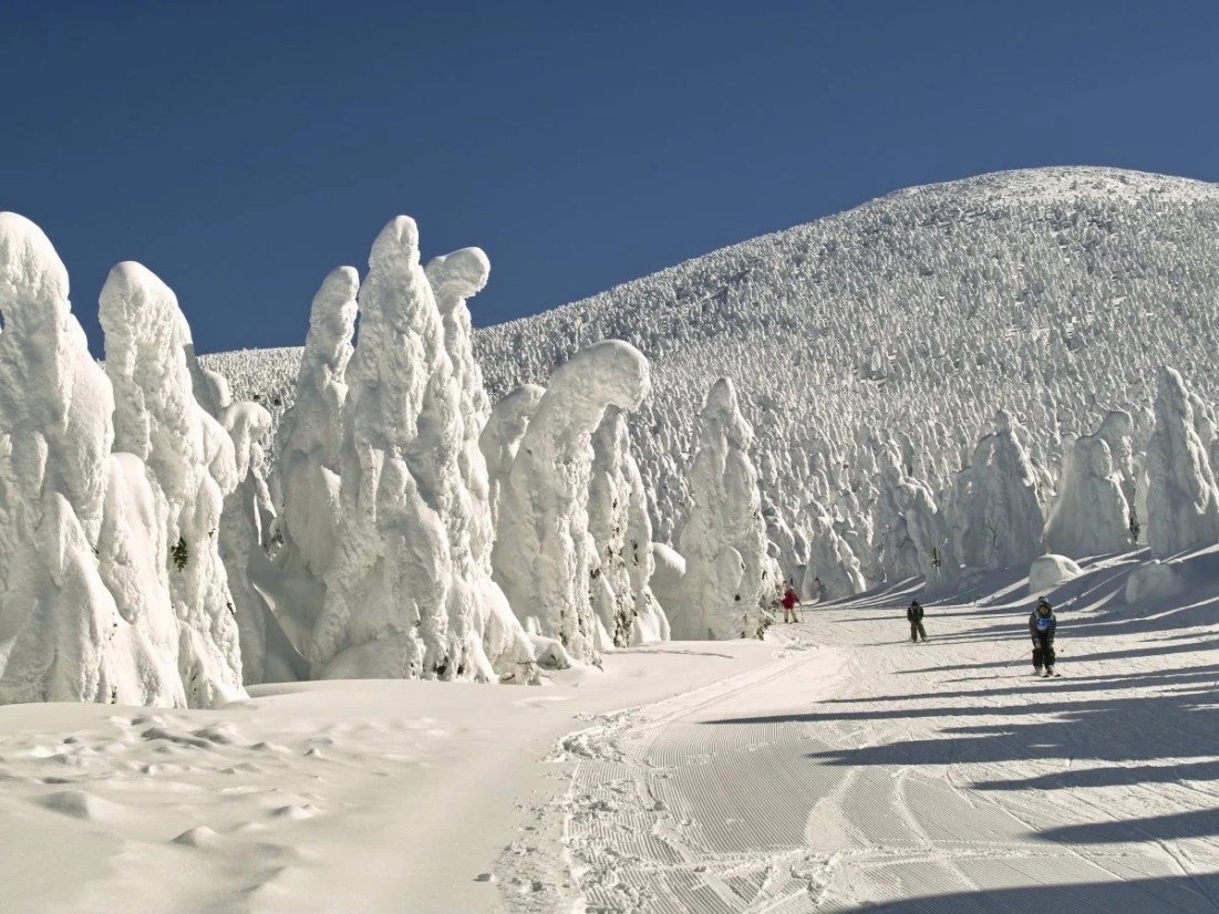 visit-the-zao-onsen-hot-spring-and-ski-resort-located-in-the-mountains-of-japans-yamagata-prefecture-and-youll-see-ice-trees--trees-that-pack-on-heavy-amounts-of-snow-to-take-on-fascinating-shapes