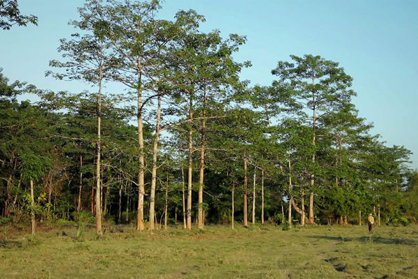 Molai forest India