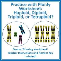 Ploidy Worksheet - Haploid and Diploid and more