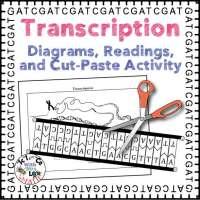 Transcription Activity