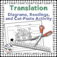 Translation Activity