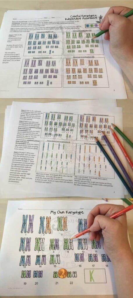 karyotype-pin
