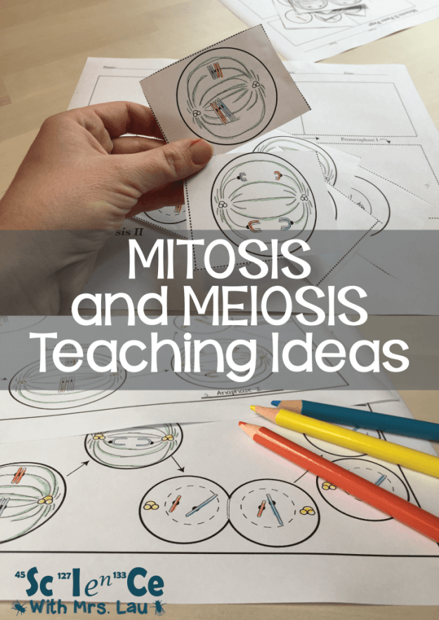Meiosis and Mitosis Teaching Ideas: Blog by Science with Mrs