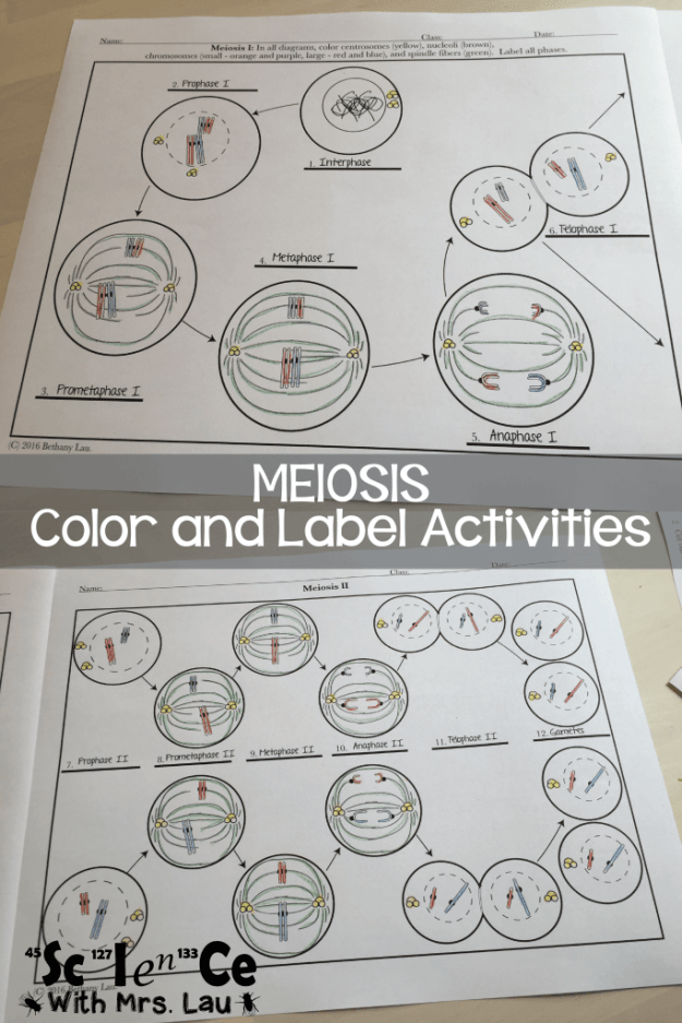Meiosis And Mitosis Teaching Ideas Blog By Science With Mrs Lau