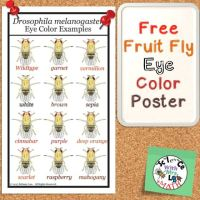 Fruit Fly Eye Color Free Poster