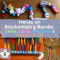 Biochemistry Beads Pipe Cleaners Activity