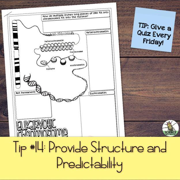 Provide Structure and Predictability