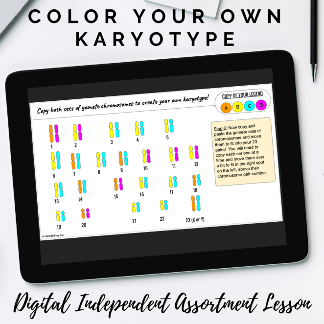 Karyotype Lesson that students can color on paper or on Google Slides