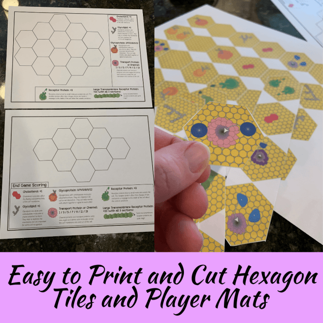 Teacher instructions and printing and cutting instructions for the cell membrane game.