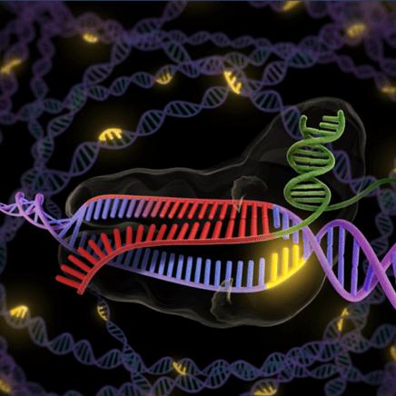 East Bay Science Cafe March 12 - CRISPR