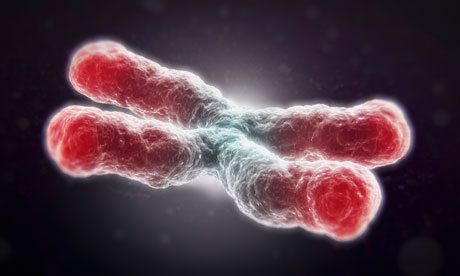 Skeptics Guide to Debunking Claims about Telomeres in the