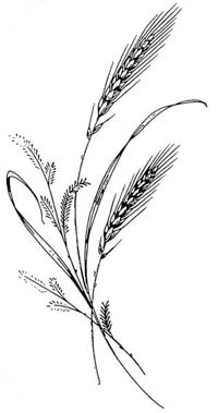 Rice Coloring Pages