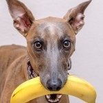 Kuiper holds a banana in his mouth.