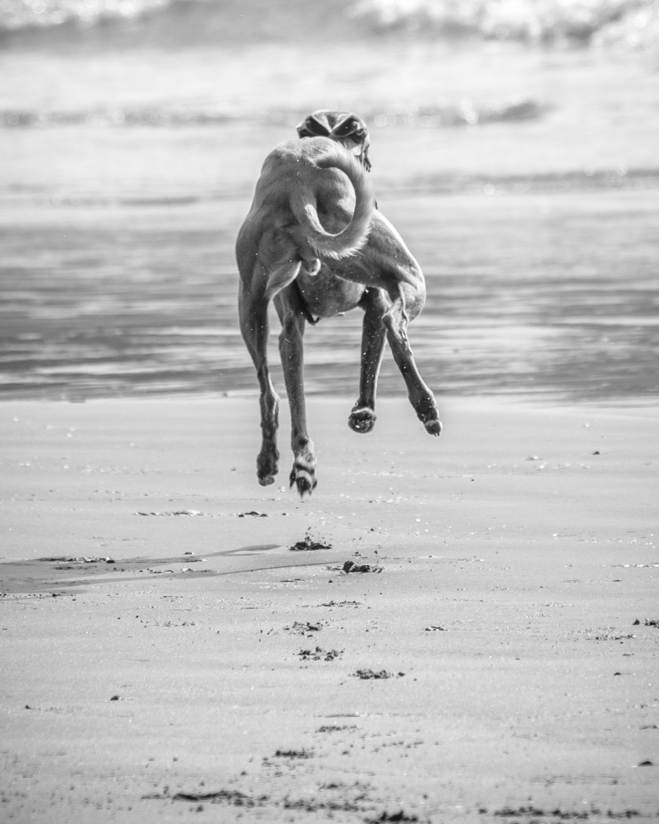 Kuiper leaps into the air, leaving footprints on the beach.