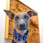 Kuiper poses with a frame foam set piece on the wall. He is wearing a rocket collar.