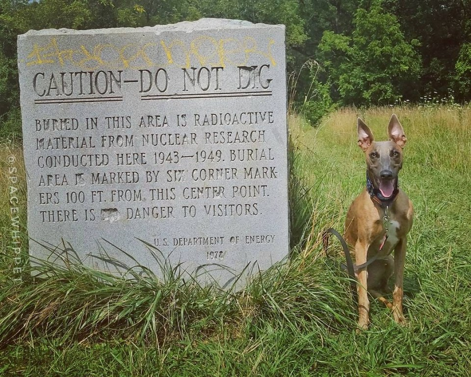 """Kuiper with the Plot M sign """"Caution - Do Not Dig. Buried in this area is radioactive waste...There is no danger to visitors."""" The """"No"""" has been carefully chiseled out."""