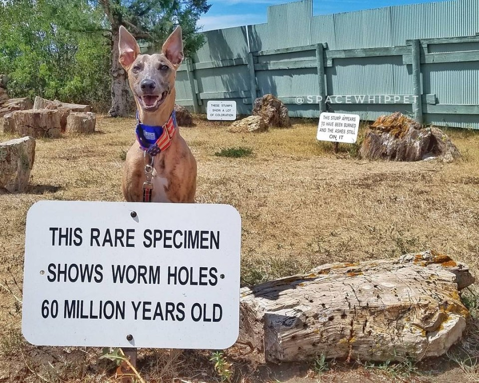 """Kuiper sits with a piece of petrified wood with holes in it. The sign reads, """"This rare specimen shows worm holes 60 million years old."""""""