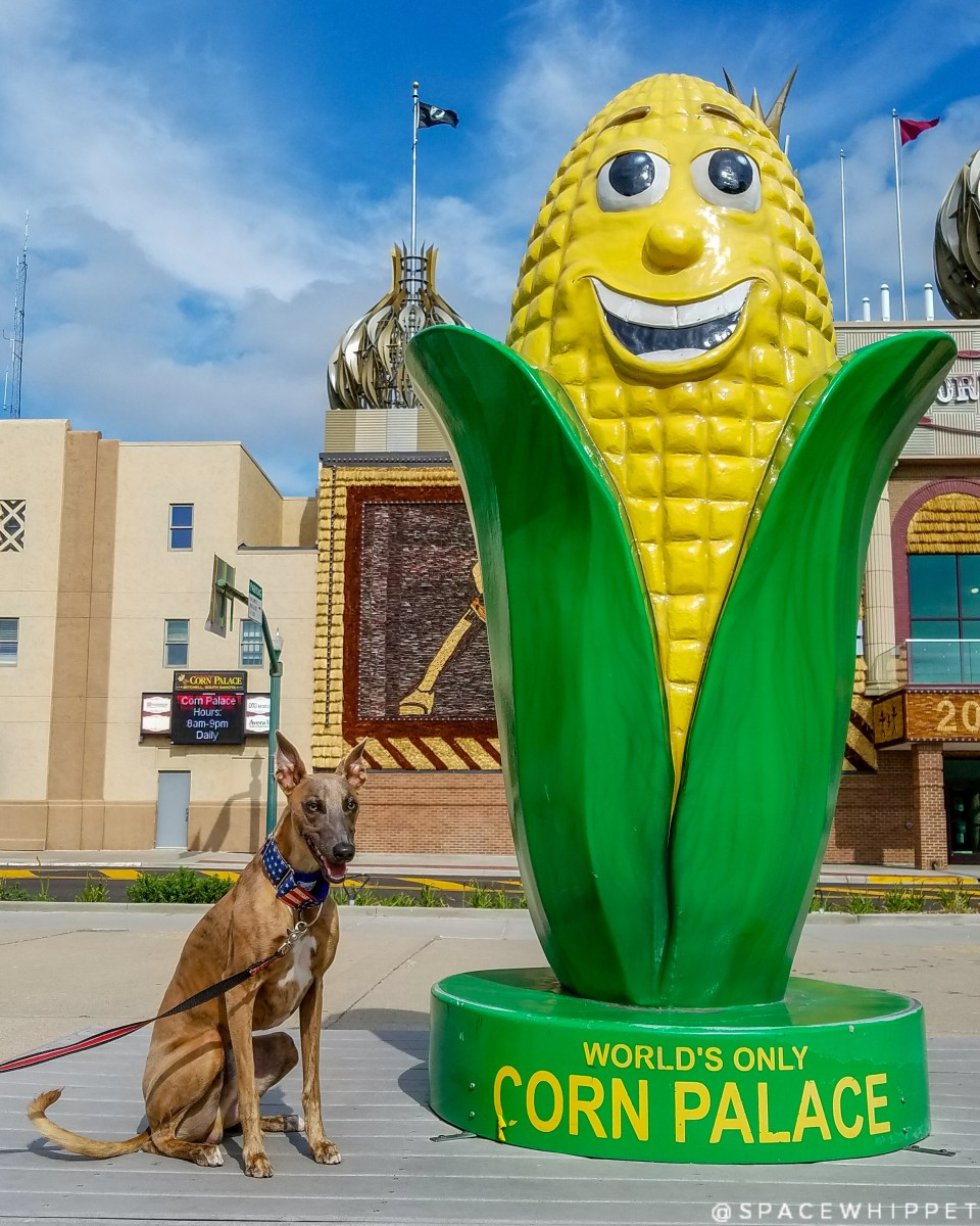 Kuiper poses happily with a giant corn statue.