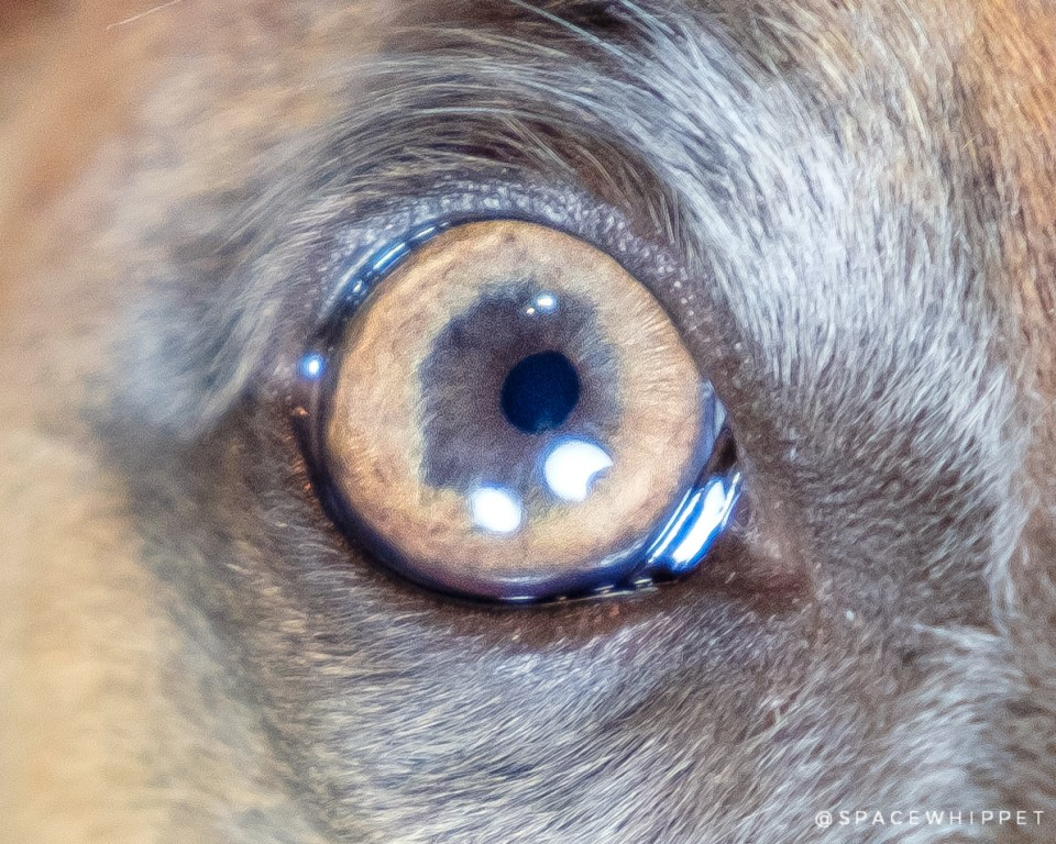 Closeup of Kuiper's eye.