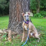 Kuiper sits in front of a Loblolly Moon Tree.