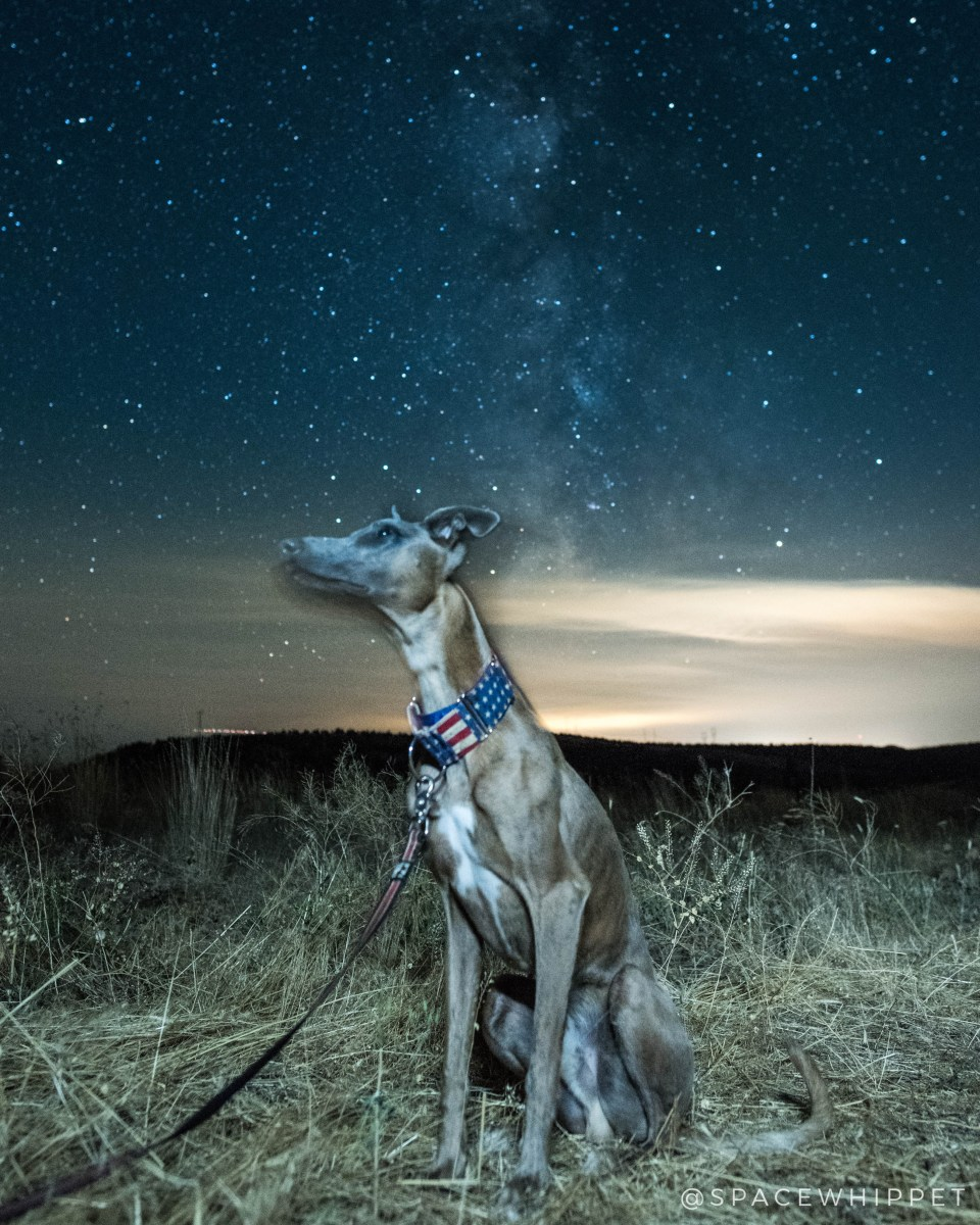 Kuiper gazes up at the Milky Way. He is wearing an American flag collar.