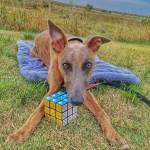 Kuiper poses with a solved Rubik's cube.